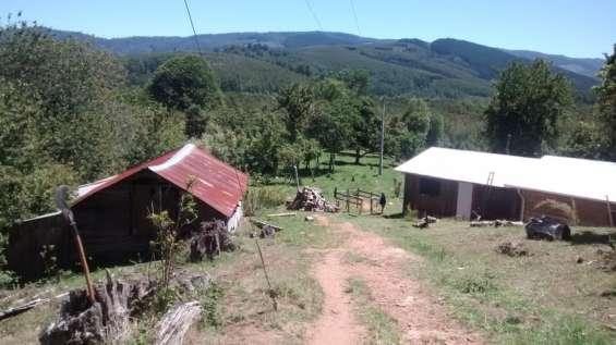 Campo de 80 hectáreas