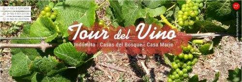 Ruta viñedos de chile / tour valle casablanca/ colchagua, valparaiso
