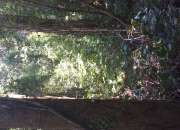 Parcela con bosque nativo